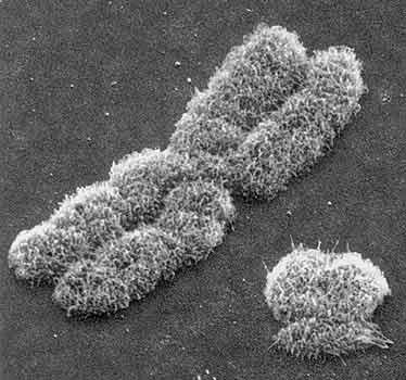 днк человека под микроскопом фото